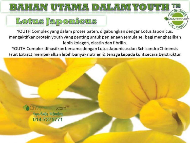 2.5 BAHAN UTAMA DALAMYOUTH™ LOTUS JAPONICUS