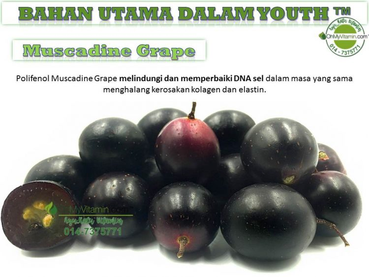 5 BAHAN UTAMA DALAM  YOUTH SKINCARE MUSCADINE GRAPE