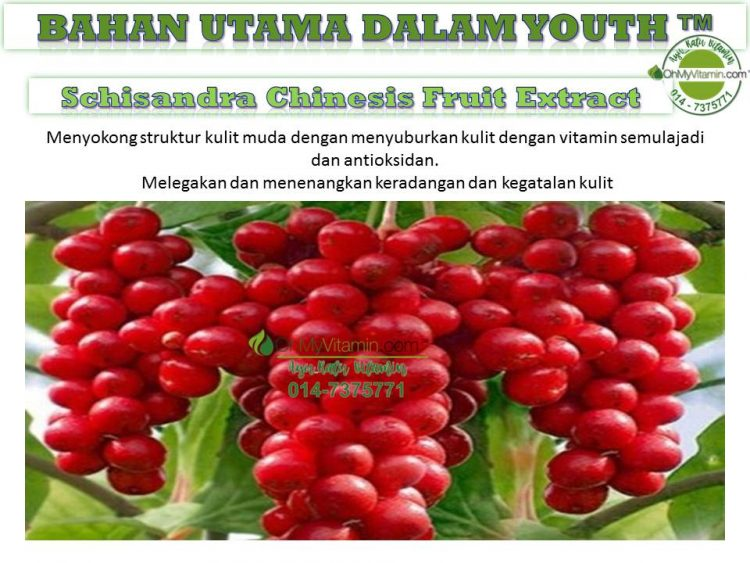 5 BAHAN UTAMA DALAM  YOUTH™ SCHISANDRA CHINESIS FRUIT EXTRACT