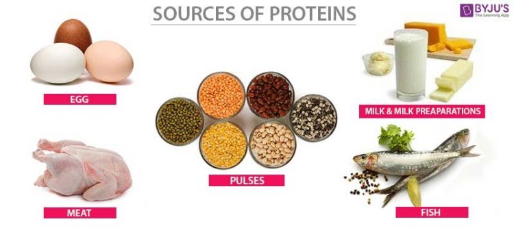 SUMBER PROTEIN