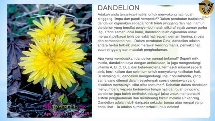 DANDELION ANTARA 11 MAKANAN UNTUK DETOX